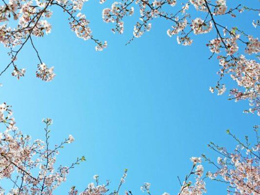 Skyfrihimmel med blomster