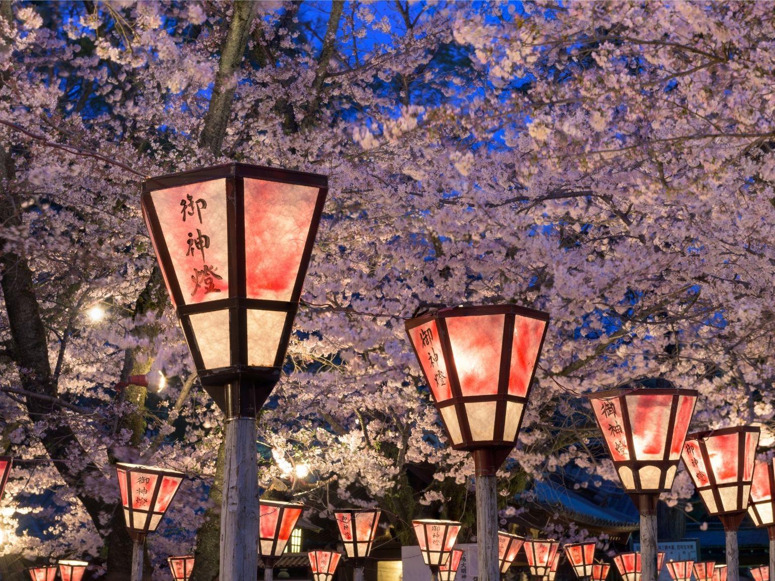 Japanske lanterner og kirsebærtræer