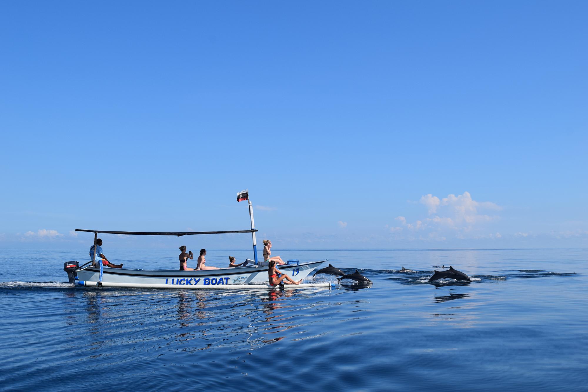 Delfin safari